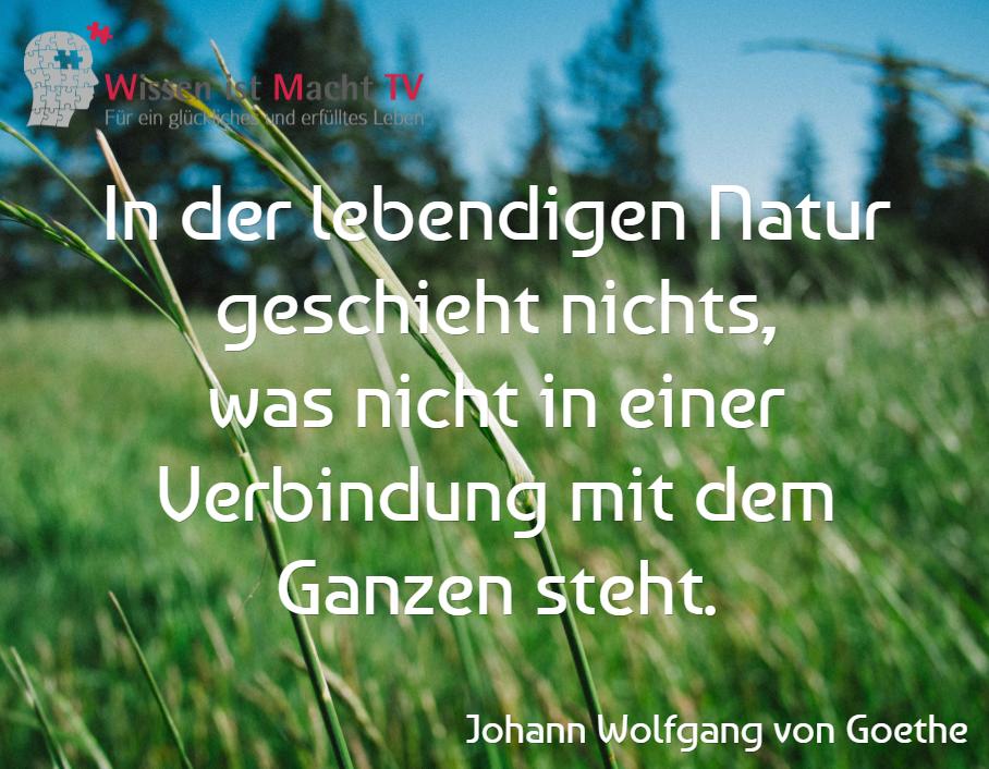 Werses Zitat Von Goethe Versteht Dem Durfte Ein Flaues Gefuhl Im Magen Nicht Fremd Sein Mal