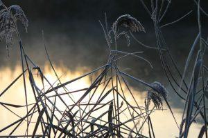 Geistige Erstarrung, Weiden am Fluss